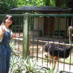 サイゴン動植物園に行ってみたら少しだけ日本を味わった(MILU)