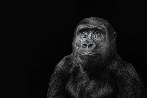 monkey-2959524_1280